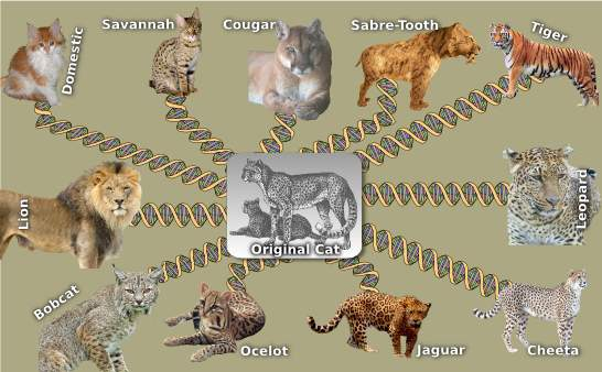 Cat Kind DNA Chain