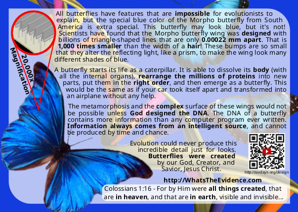 Morpho Butterfly Design Postcard back