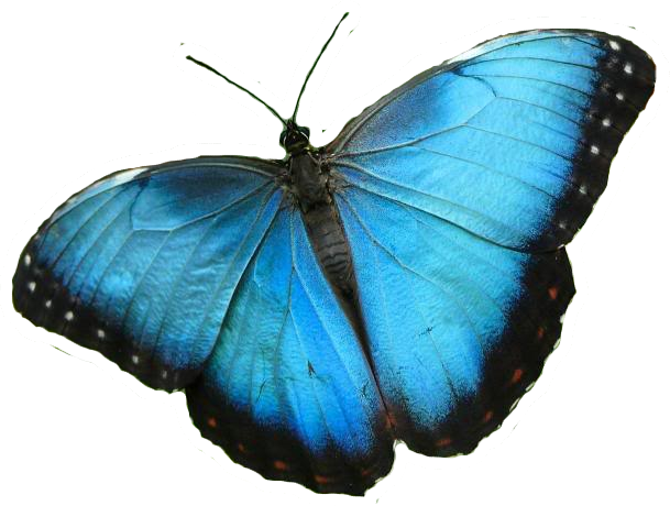 the butterfly is god s design clip clip art images clip clip art bees