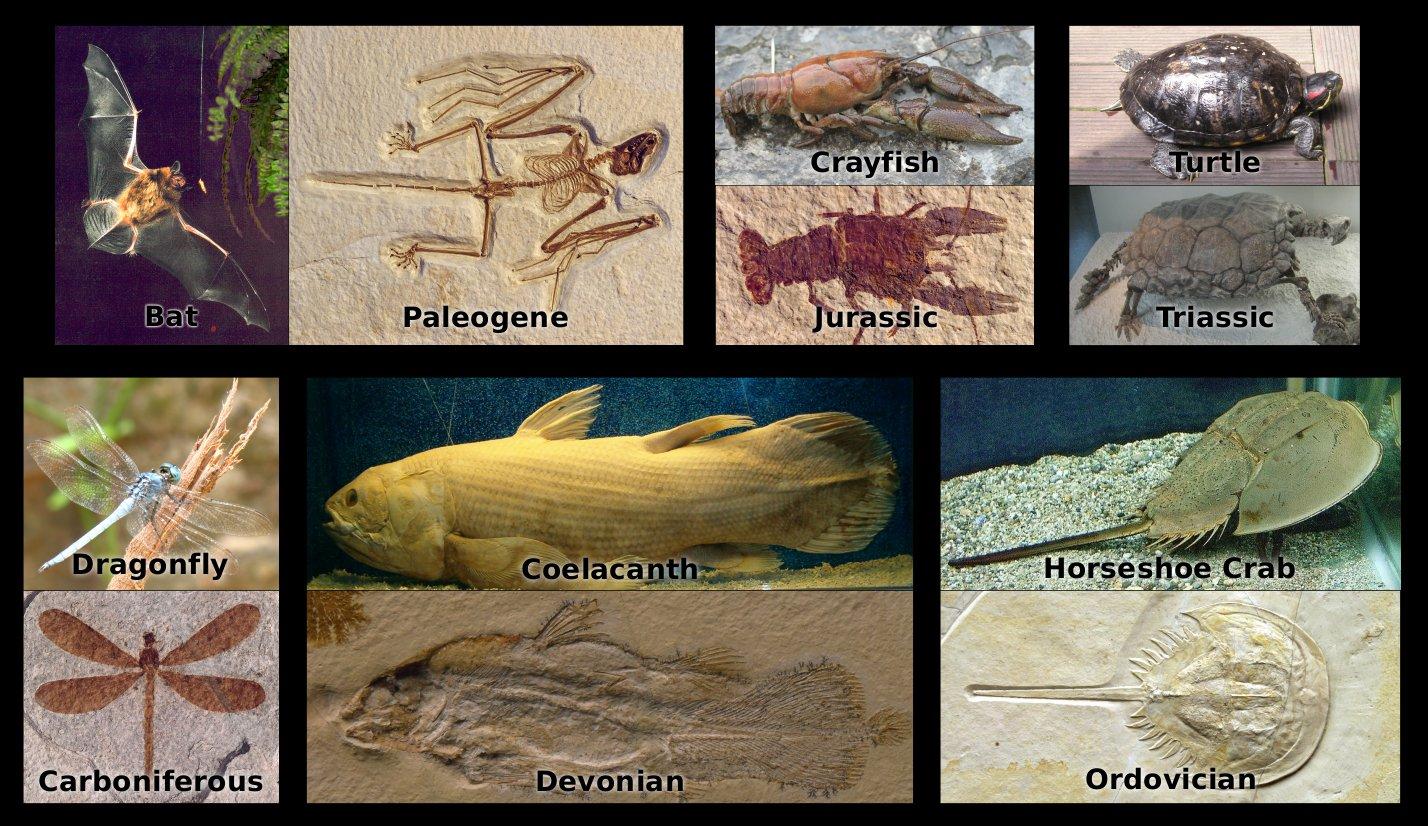 fossils confirm the biblical creation u0026 the genesis flood