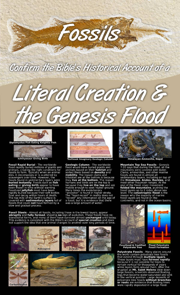 Fossils Confirm the Bibles Historical Account of A Literal Creation and the Genesis Flood