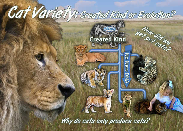 Cat Variety - Created Kind or Evolution - God Created the Animal Kinds