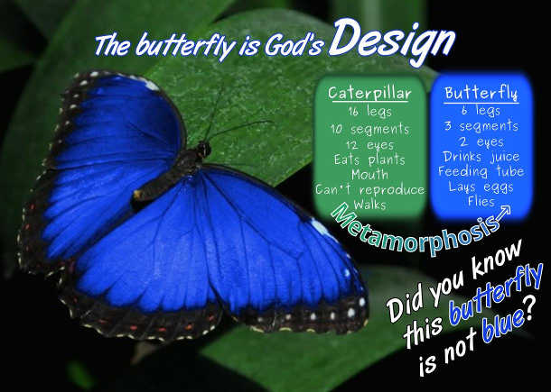 The Butterfly is Gods Design